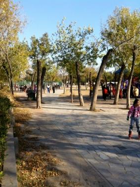 Local park on an Autumn afternoon